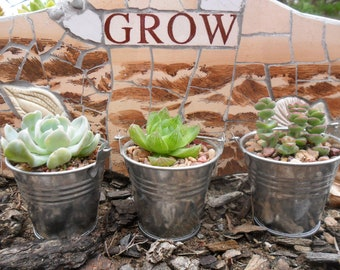 40 Succulents, Silver Pails, Party Favors, Take Away Gifts, Weddings, Table Decor, Galvanized Buckets, Rustic