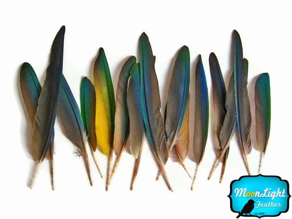 6 Pieces - Small Greenwing Macaw wing Feathers - rare - : 1348