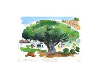 That Same Pine Tree Revisited 6.30.12 Santa Barbara 9 am