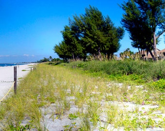 Panorama : Captiva Island Cottages at the Beach