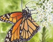 Monarch, butterfly watercolor painting, giclée print, orange, black, green