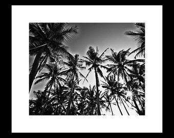 Palms 12X16 Fine Art  Print