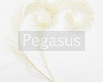 IVORY Curled Peacock Sword Tail Feathers (4 or 12 Feathers, 12 color option) for wedding bouquets, floral center pieces,hat,millinery