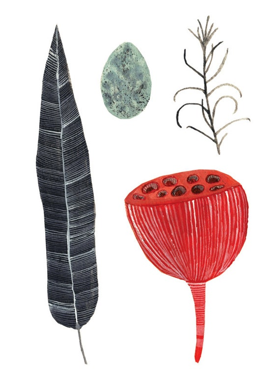 Art Print 5x7 Collection seed pod feather egg