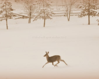 Snowy Deer in the Meadow, Winter Photography, Sepia, Fine Art Photograph