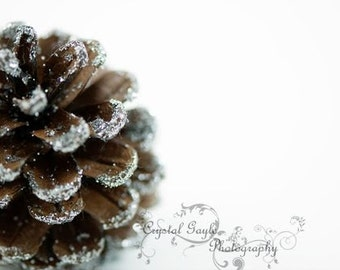 Pine Cone Photography Print ~ Brown Christmas Home Decor Wall Art ~ White Picture, Seasonal Office Accent, Man Cave Accent, Gift for Men