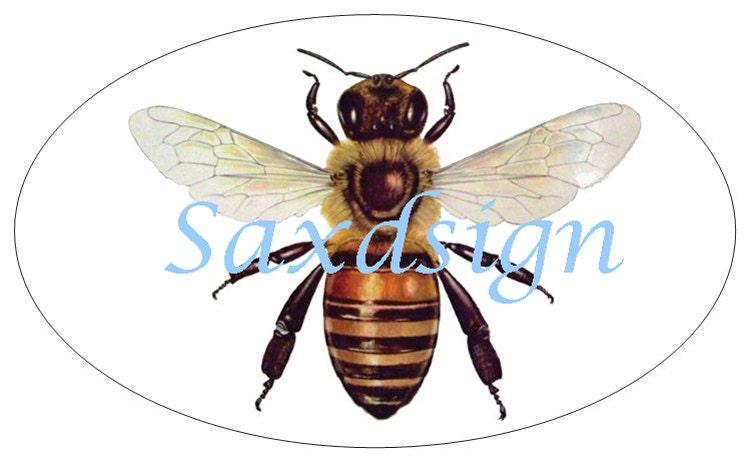 Honey Bee Auto Car Decal Sticker Beekeeping Apiary Entemology