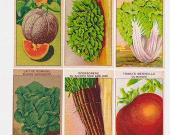 Botanical lithographs 24 Vintage French Vegetable Seed Packet Labels dating to the 1920s for collectors and garden art (Set C)