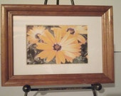 Daisy Photo - Matted and Framed Daisys Photograph - 6 x 8 Photo - Yellow Daisys - Flower Photo - Summer Daisys