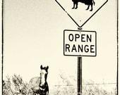 Open range sign, horse art, horse photography, barbwire fence, black and white, sepia tone, antique photo, ranch horse, cattle, Marana AZ