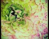 Ranunculus : floral photo shabby chic macro flower photography pastel green pink aqua spring summer home decor 10x10 16x16 20x20 24x24 30x30