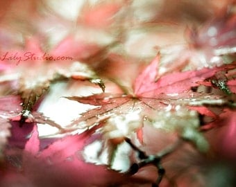 Japanese Maple III : leaf macro photography surreal photo red black green winter holiday home decor 8x12 12x18 16x24 20x30 24x36