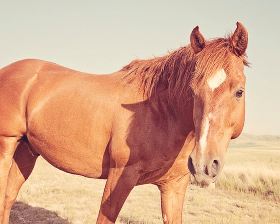 Desert Tan Horse Photo | Equestrian Art