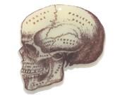 B160 Medical Skull Printed Acrylic Charm. Vintage, steampunk, victorian