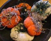Orange and White Mini Pumpkin Bowl Fillers with Dried Naturals