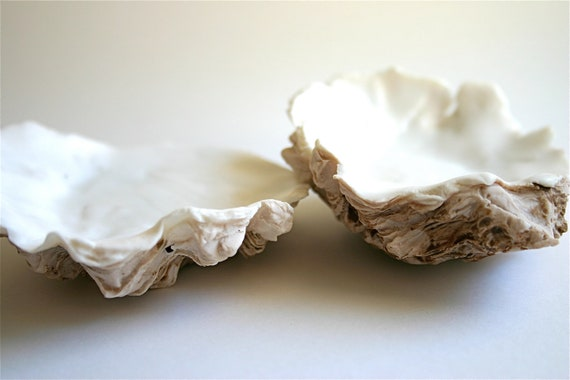Chocolate Oyster Shell