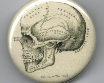 Skull with Scientific Labelling 1.25 inch Pin back BUTTON Vintage Image