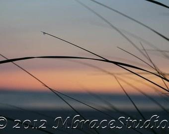 Beach Closeup- Dune Grass in the Sunrise -peach, pink, rose - silhouette- matted beach photo-Beach cottage-Cape Cod-hostess gift under 25