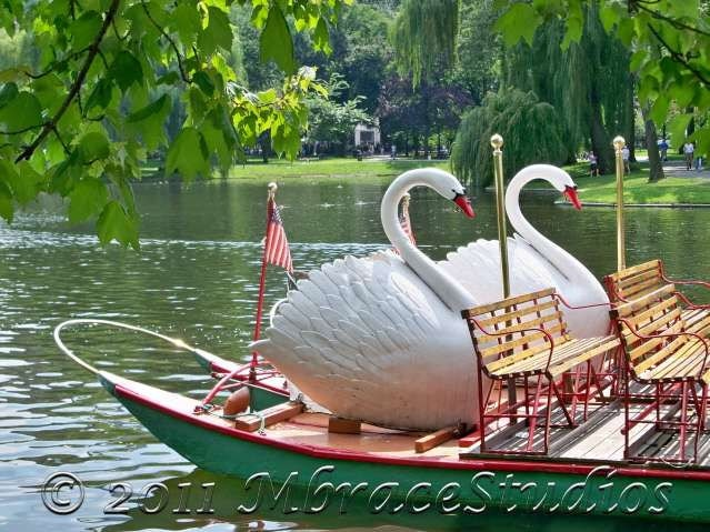 Swan Boat Photograph Boston Public Garden Under 25 Home