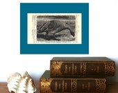 Cape Barren Goose Vintage Art Print on an Antique 1896 Dictionary Book Page