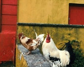 Roosters of the Aran Islands 8 X 12 Fine Art Photography Print (Ireland, Roosters, Kitchen, Decor, Travel, Farm, Animals, Wanderlust)