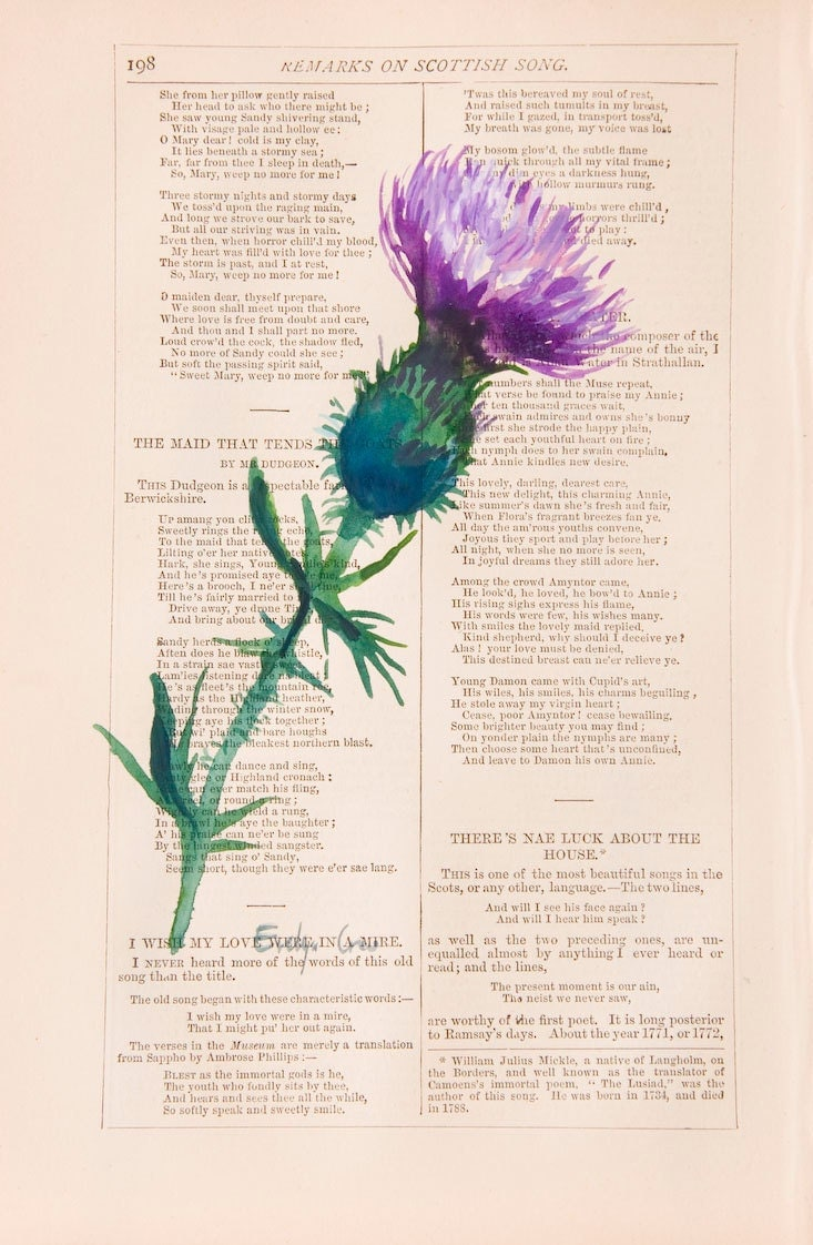 Book Cover Watercolor Uk : Scottish thistle original watercolor painting on antique