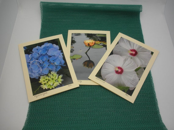 Three photo greeting cards,original, blank with color paper insert, matching glossy ecru envelopes.