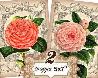Peony Flowers with vintage french background postcards 5 x 7 inch Altered Art, ATC, Scrapbooking, Decoupage, Craft (351) Buy 3 - get 1 free