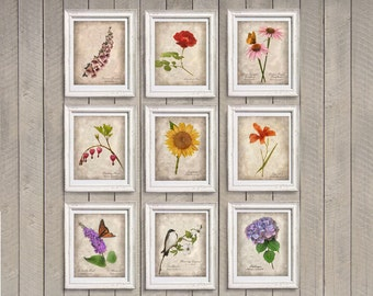 Set of 9 Botanical Photographs - Instant Decor - Garden Flowers Distressed Sepia Beige Home Decor Wall Art 5x7 8x10 4x6