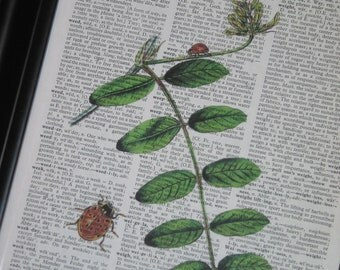 BOGO SALE Lady Bug Print Botanical Art Natural History Wall Art Upcycle Vintage Dictionary Art Dictionary Print