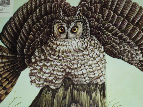 Book Owls of North America Paintings Karalus 1974