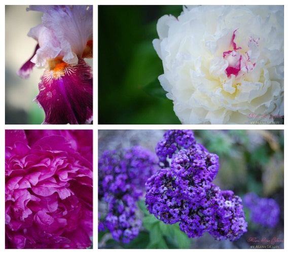 Flowering Fuschia Photo Collection- Fine Art Photopgraphy- Four 5x7 prints-Alana Gillett- Hot Pink Amethyst White Romantic Wall Art Decor