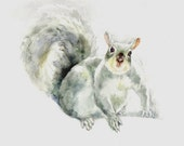 Squirrel -print from original watercolor painting, Holiday present / birthday present / art collection