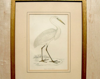 1870 Great White Heron Antique Aquatic Bird Gold Framed Vintage Ornithology Hand Colored Coloured Engraving Print
