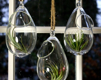 hand blown glass plant globe hanging terrarium