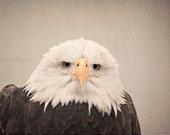 Bald Eagle Photography - Eagle Eyes - Rustic Brown Patriotic Americana Wildlife Bald Eagle Bird Photography Woodland Eagle Photography