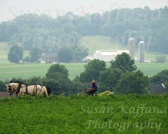 Amish Countryside    8x10...11x14...11x14 matted to16x20. Fine Original Photography...Lancaster..Tobacco