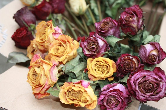Set of 57 Natural Color - Roses for Luck, Love, Romance and all other Matters of the Heart