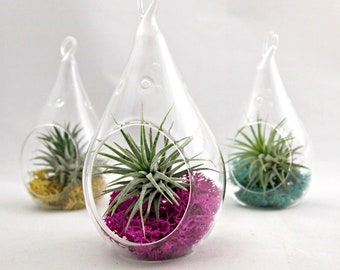 Small Droplet Air Plant Terrarium // Choose Your Own Moss Color