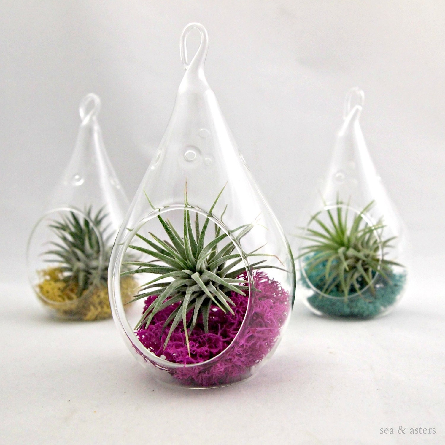 Small Droplet Air Plant Terrarium // Choose Your By