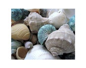 Aqua  Seashells, 20 x 16  Canvas Gallery Wrap, READY TO SHIP, For Dad , Grad, Bride or Groom