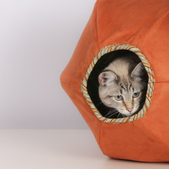 Cat Ball for the Curious Feline
