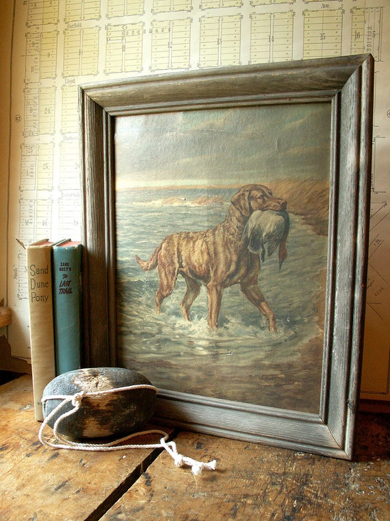 Vintage Gun Dog Chesapeake Bay Retriever Framed Print by Megargee