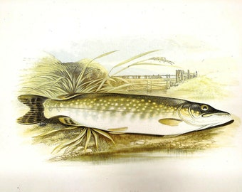 Vintage FISH PRINT 1990 Art Book Plate 114 Antique Painted in 1785 Pike Beautiful Fish Ocean Sea Boat Ship