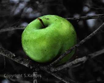 Green Apple Photograph Black Gray Lime Green Wall Art, Food Photograph, Kitchen Apple Wall Art 8x8