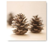 Pinecone Photo, Holiday Home Decor, Still Life, Nature Photography, cream, beige, brown, woodland, cabin decor, winter pine cone