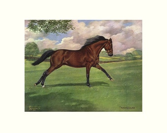 "NASRULLA Irish Thoroughbred Racehorse by Allen F. Brewer Jr. - Print size 17"" X 22"", Image Size 11"" X 14"" - Color"