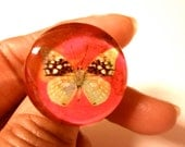 Butterfly Ring Adjustable Spring Summer Jewelry
