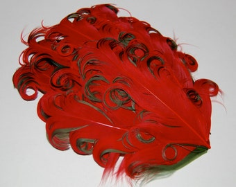 Curly Feather Pad - Two Tone  Red on  Dark Green FP251 - (1 pc)  Christmas Holiday feather pads