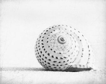 "Black and White Seashell Photography - beach sea shell wall art white light grey gray coastal - 8x10, 11x14 Photograph, ""Seashell Voices"""